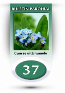 nr.37 - floare de nu-ma-uita
